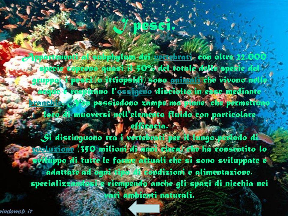 vertebrati pesci anfibi rettili uccelli mammifer i filmato delfinocarpa salamandra Cobra reale Corvo imperiale