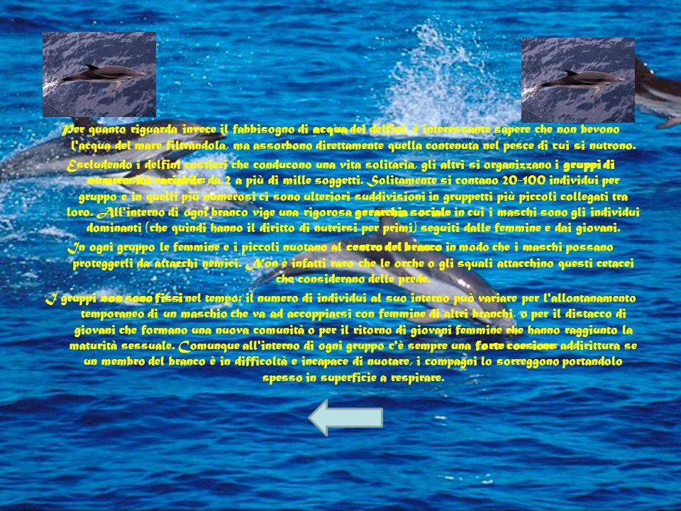 Generalmente la loro alimentazione varia dal pesce (aringhe, capelin) ai calamari sino ai crostacei, a seconda delle diverse specie e della disponibil