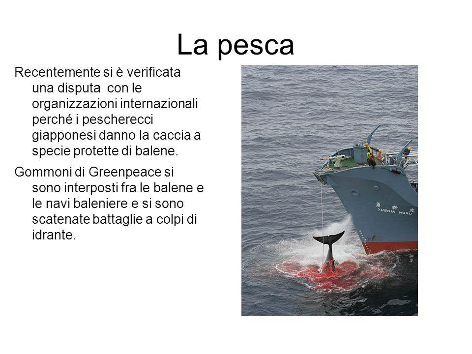 La pesca Recentemente si è verificata una disputa con le organizzazioni internazionali perché i pescherecci giapponesi danno la caccia a specie protet