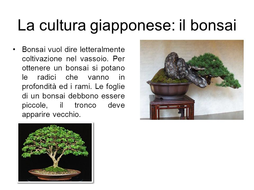 La cultura giapponese: il bonsai Bonsai vuol dire letteralmente coltivazione nel vassoio. Per ottenere un bonsai si potano le radici che vanno in prof