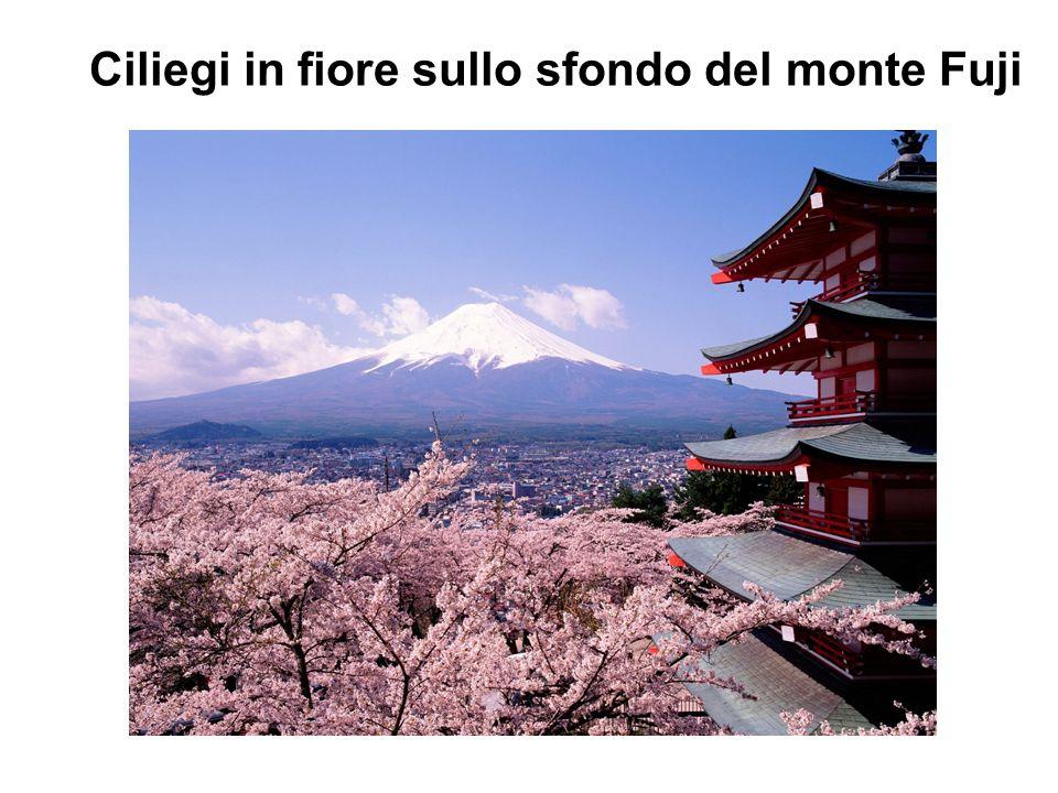 Ciliegi in fiore sullo sfondo del monte Fuji