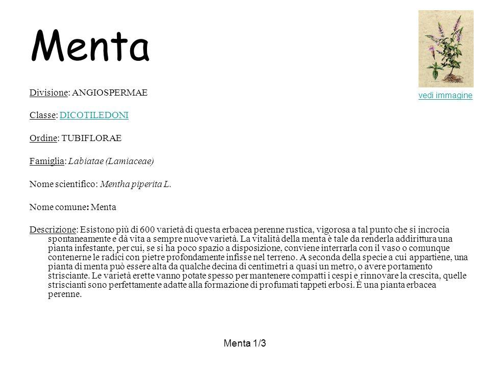 Menta 1/3 Menta Divisione: ANGIOSPERMAE Classe: DICOTILEDONIDICOTILEDONI Ordine: TUBIFLORAE Famiglia: Labiatae (Lamiaceae) Nome scientifico: Mentha piperita L.