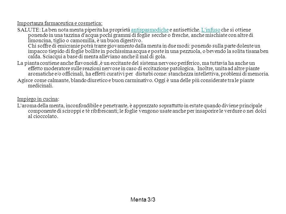 Menta 3/3 Importanza farmaceutica e cosmetica: SALUTE: La ben nota menta piperita ha proprietà antispasmodiche e antisettiche.
