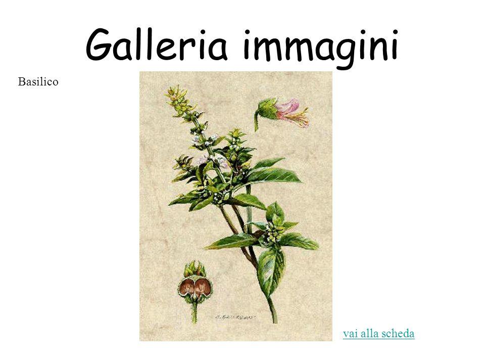 Galleria immagini vai alla scheda Basilico