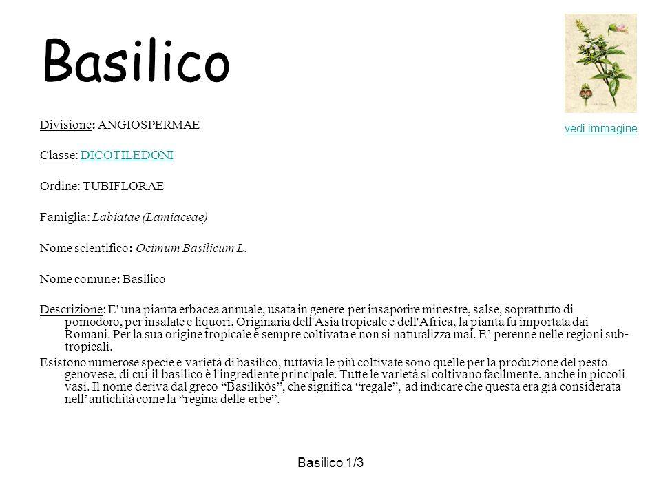 Basilico 1/3 Basilico Divisione: ANGIOSPERMAE Classe: DICOTILEDONIDICOTILEDONI Ordine: TUBIFLORAE Famiglia: Labiatae (Lamiaceae) Nome scientifico: Ocimum Basilicum L.