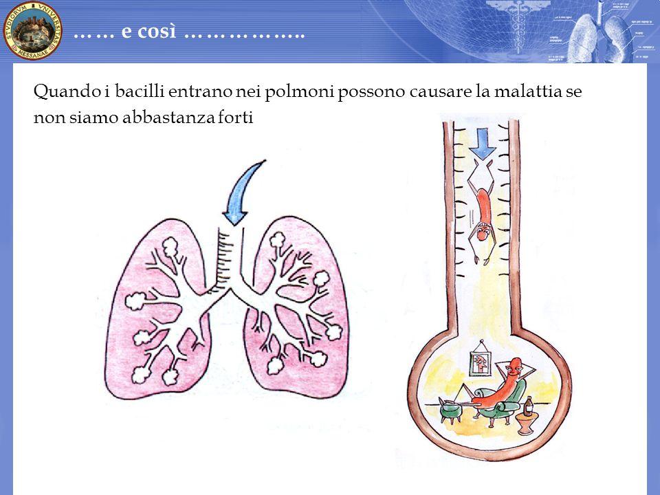 Quando i bacilli entrano nei polmoni possono causare la malattia se non siamo abbastanza forti …… e così ……………..