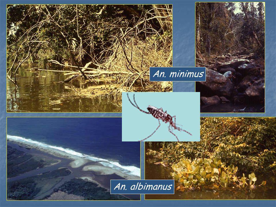An. albimanus An. minimus