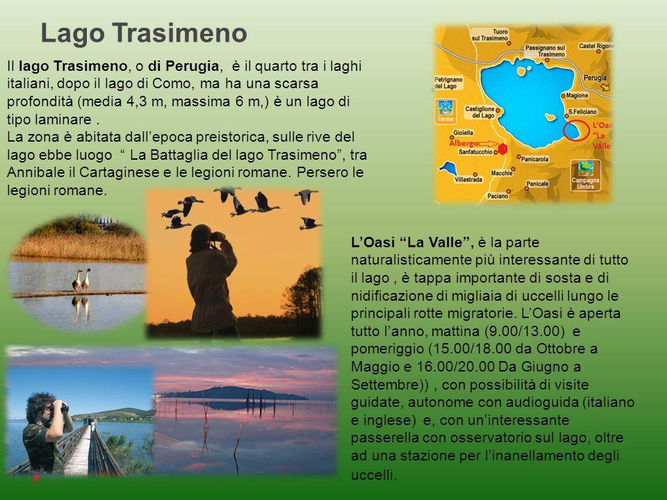 Lago Trasimeno Il lago Trasimeno, o di Perugia, è il quarto tra i laghi italiani, dopo il lago di Como, ma ha una scarsa profondità (media 4,3 m, mass