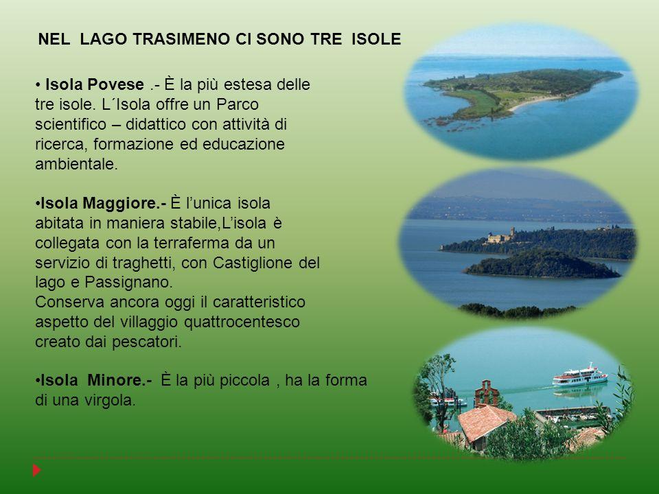 NEL LAGO TRASIMENO CI SONO TRE ISOLE Isola Povese.- È la più estesa delle tre isole. L´Isola offre un Parco scientifico – didattico con attività di ri