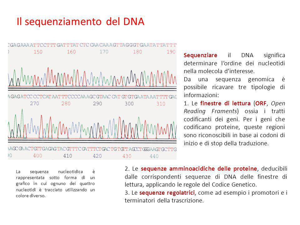 Il sequenziamento del DNA Sequenziare il DNA significa determinare lordine dei nucleotidi nella molecola dinteresse. Da una sequenza genomica è possib