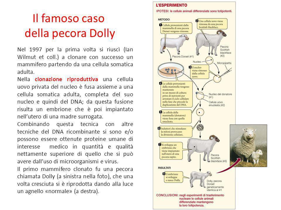 Il famoso caso della pecora Dolly Nel 1997 per la prima volta si riuscì (Ian Wilmut et coll.) a clonare con successo un mammifero partendo da una cell