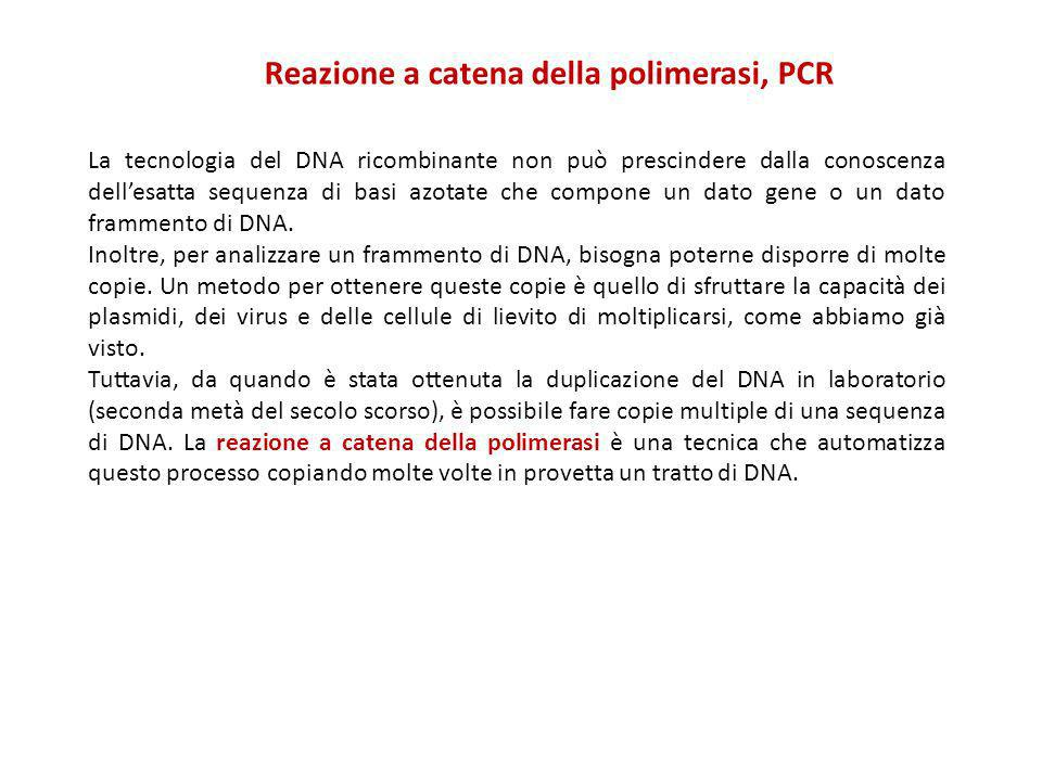 La tecnologia del DNA ricombinante non può prescindere dalla conoscenza dellesatta sequenza di basi azotate che compone un dato gene o un dato frammen