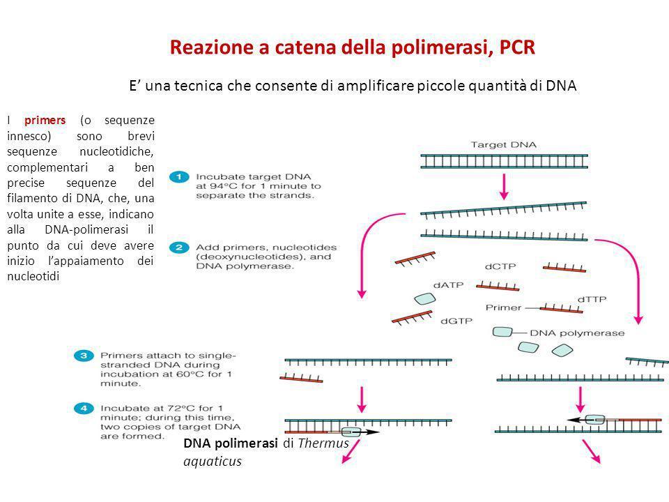 E una tecnica che consente di amplificare piccole quantità di DNA DNA polimerasi di Thermus aquaticus I primers (o sequenze innesco) sono brevi sequen