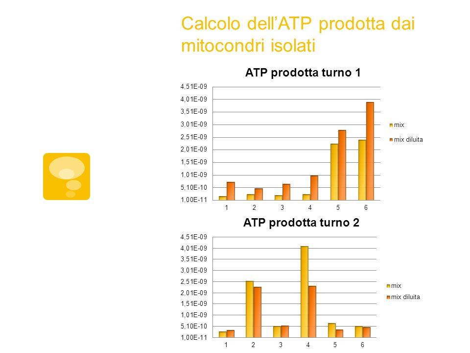 Calcolo dellATP prodotta dai mitocondri isolati