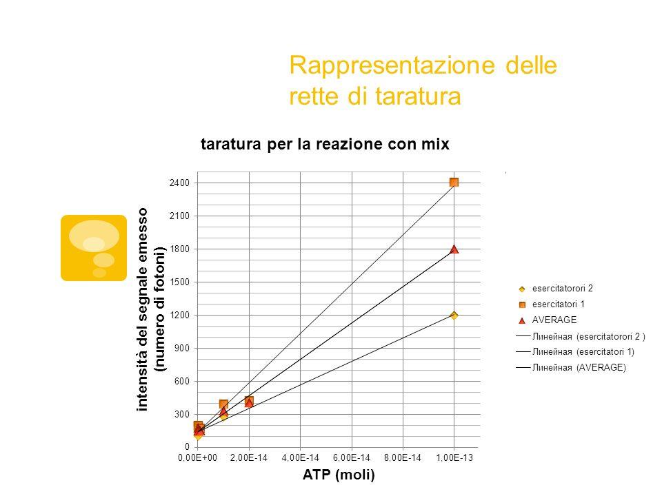 Costruzione delle rette di taratura Tabella dei dati raccolti utilizzando quantità note di ATP e mix di reazione diluita 25 volte.