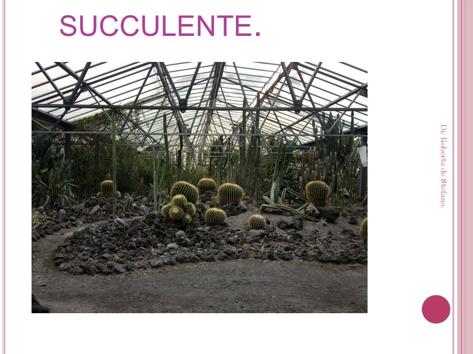 L A SERRA DELLE SUCCULENTE. Di: Roberta de Stefano.