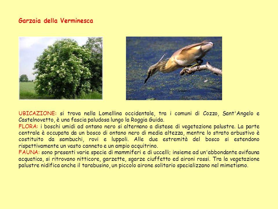 Garzaia della Verminesca UBICAZIONE: si trova nella Lomellina occidentale, tra i comuni di Cozzo, Sant'Angelo e Castelnovetto, è una fascia paludosa l