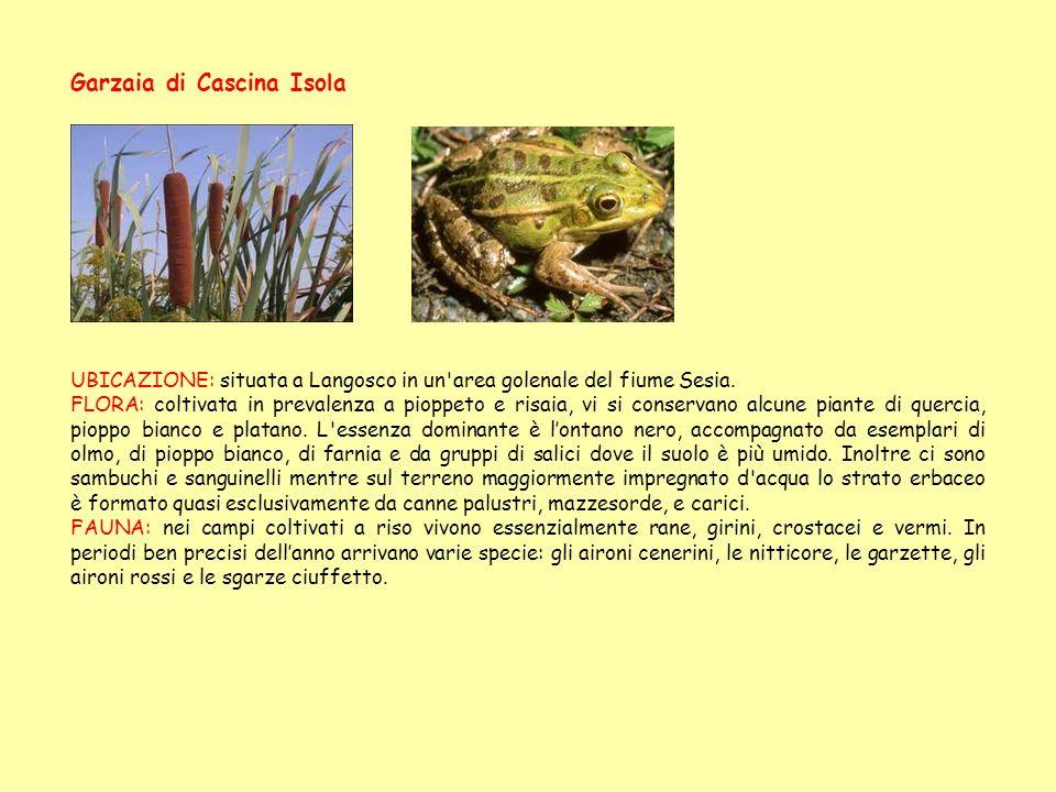 Garzaia di Cascina Isola UBICAZIONE: situata a Langosco in un'area golenale del fiume Sesia. FLORA: coltivata in prevalenza a pioppeto e risaia, vi si