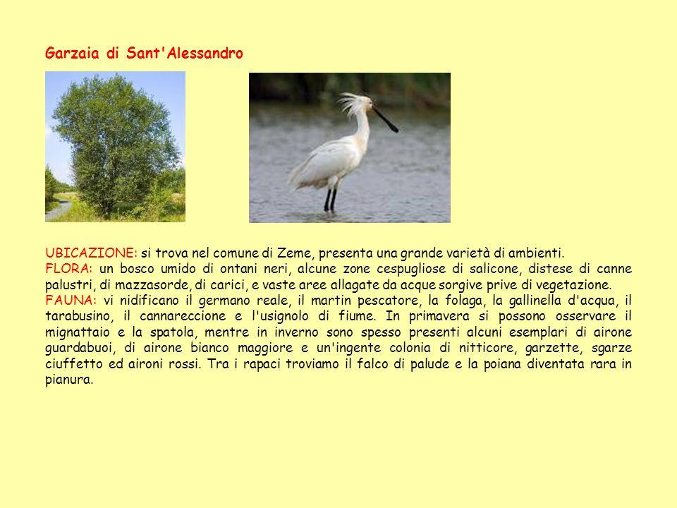 Garzaia di Sant'Alessandro UBICAZIONE: si trova nel comune di Zeme, presenta una grande varietà di ambienti. FLORA: un bosco umido di ontani neri, alc