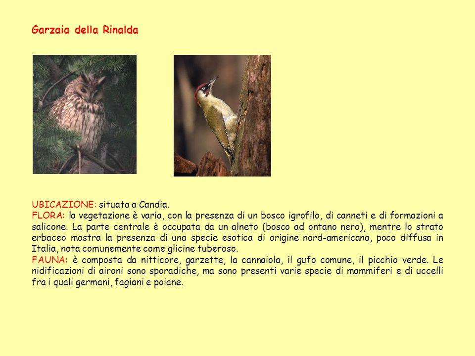 Garzaia della Rinalda UBICAZIONE: situata a Candia. FLORA: la vegetazione è varia, con la presenza di un bosco igrofilo, di canneti e di formazioni a