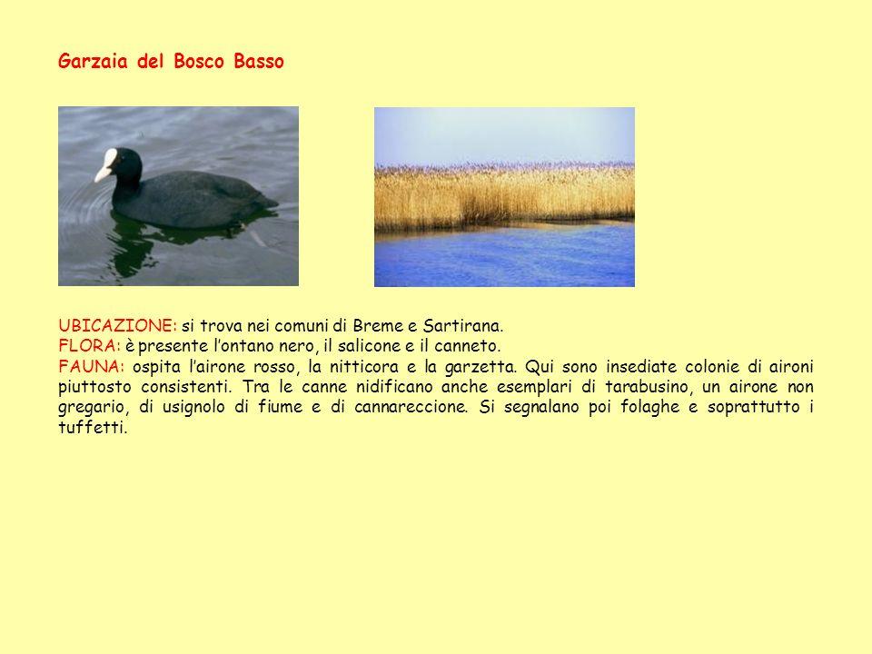 Garzaia del Bosco Basso UBICAZIONE: si trova nei comuni di Breme e Sartirana. FLORA: è presente lontano nero, il salicone e il canneto. FAUNA: ospita