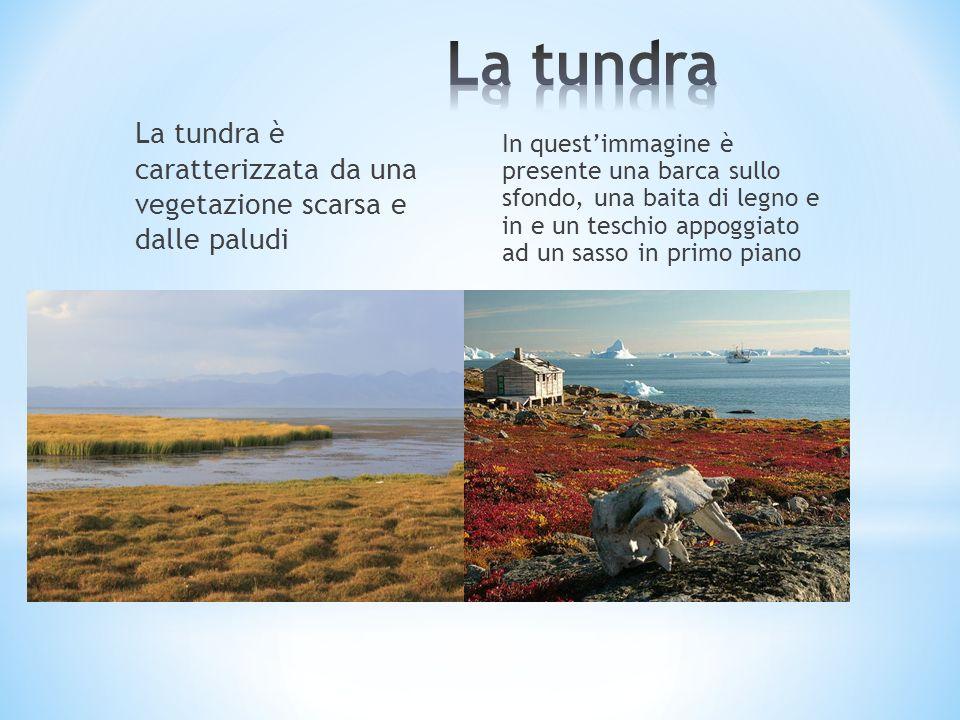 La tundra è caratterizzata da una vegetazione scarsa e dalle paludi In questimmagine è presente una barca sullo sfondo, una baita di legno e in e un t