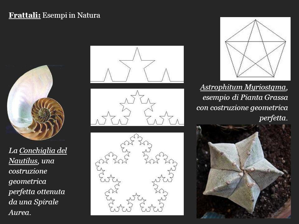 Frattali: Esempi in Natura La Conchiglia del Nautilus, una costruzione geometrica perfetta ottenuta da una Spirale Aurea. Astrophitum Myriostgma, esem