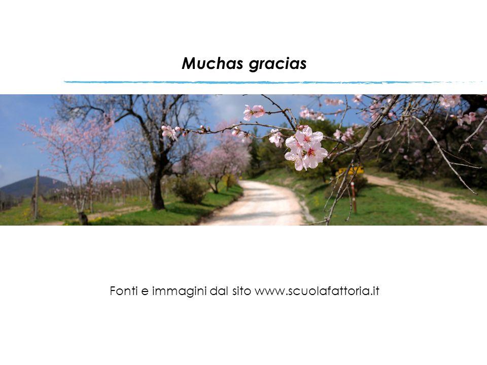 Muchas gracias Fonti e immagini dal sito www.scuolafattoria.it