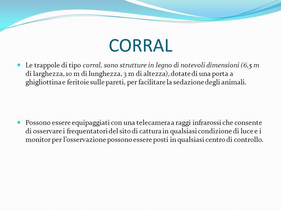 CORRAL Le trappole di tipo corral, sono strutture in legno di notevoli dimensioni (6,5 m di larghezza, 10 m di lunghezza, 3 m di altezza), dotate di u