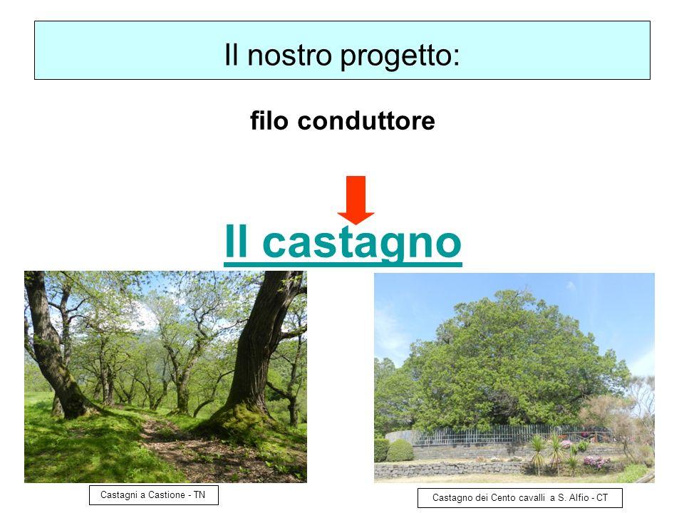 7 Perché il Castagno.