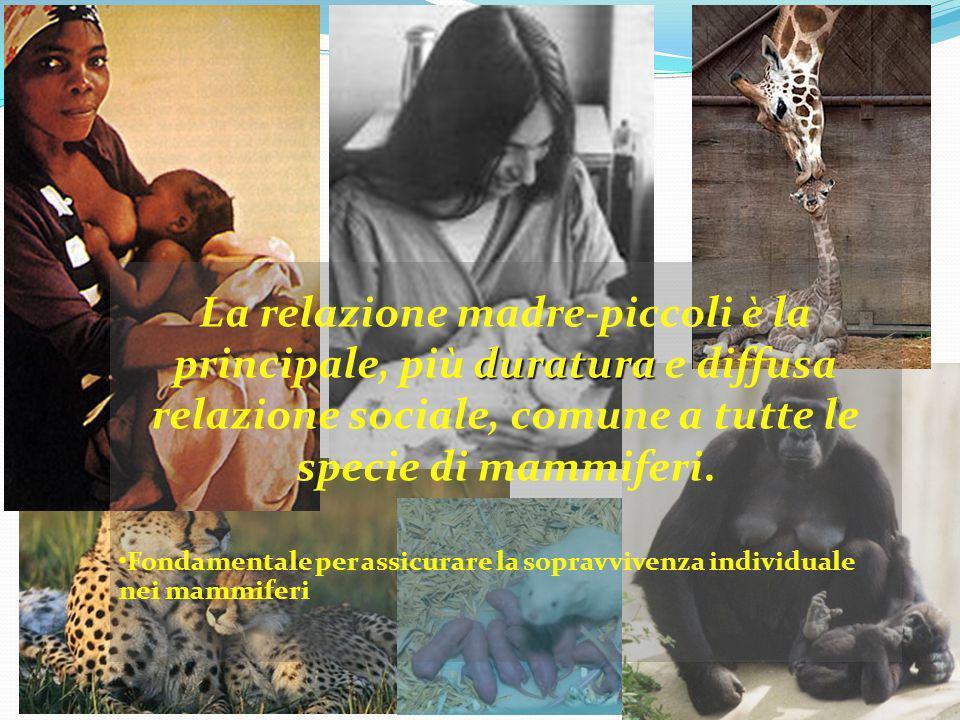 duratura La relazione madre-piccoli è la principale, più duratura e diffusa relazione sociale, comune a tutte le specie di mammiferi. Fondamentale per