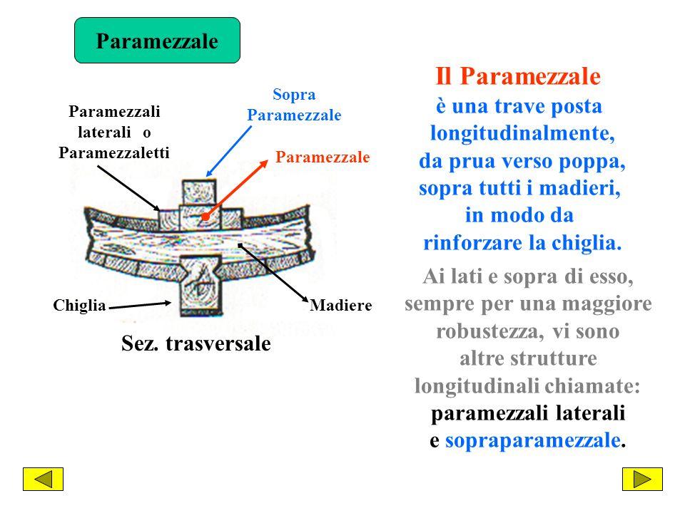 Le costole che sono allestrema prora o allestrema poppa giacciono su piani verticali rispetto a quello orizzontale, ma inclinati rispetto a quello di simmetria.