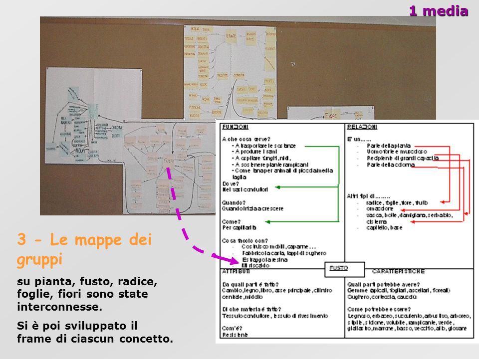 1 media 3 - Le mappe dei gruppi su pianta, fusto, radice, foglie, fiori sono state interconnesse. Si è poi sviluppato il frame di ciascun concetto.