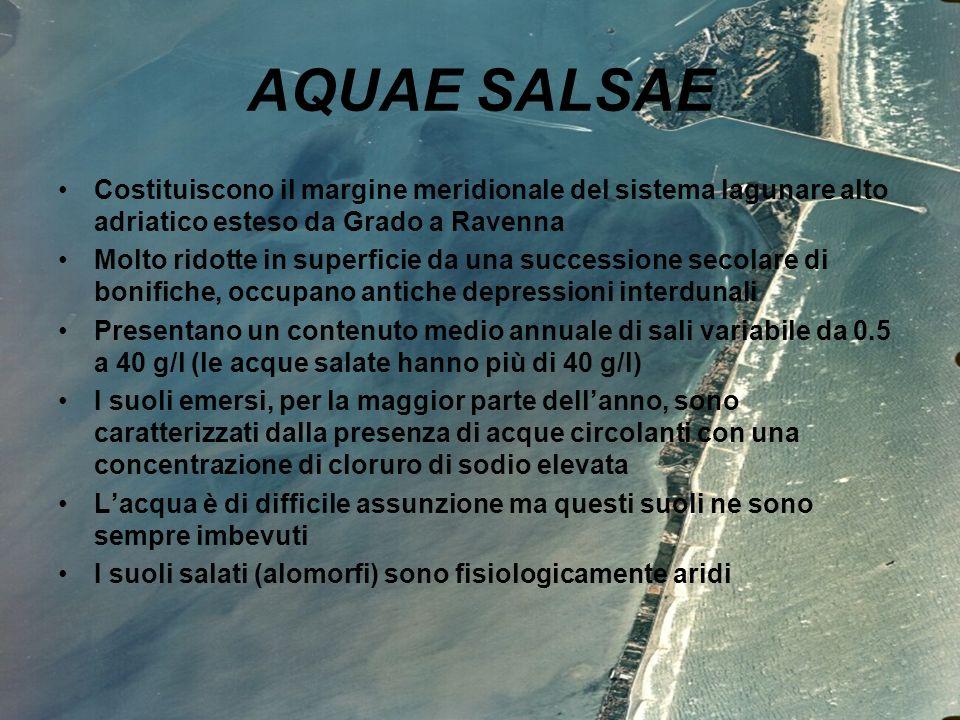 isis luzzatto 2^ DT 2006/0714 AQUAE SALSAE Costituiscono il margine meridionale del sistema lagunare alto adriatico esteso da Grado a Ravenna Molto ri