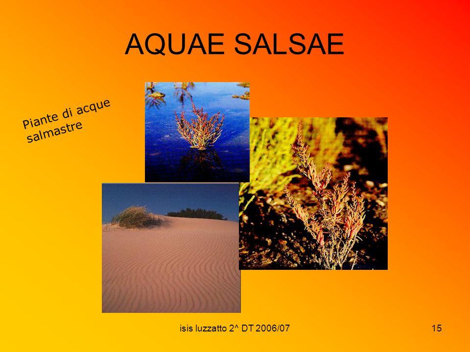 isis luzzatto 2^ DT 2006/0715 AQUAE SALSAE Piante di acque salmastre