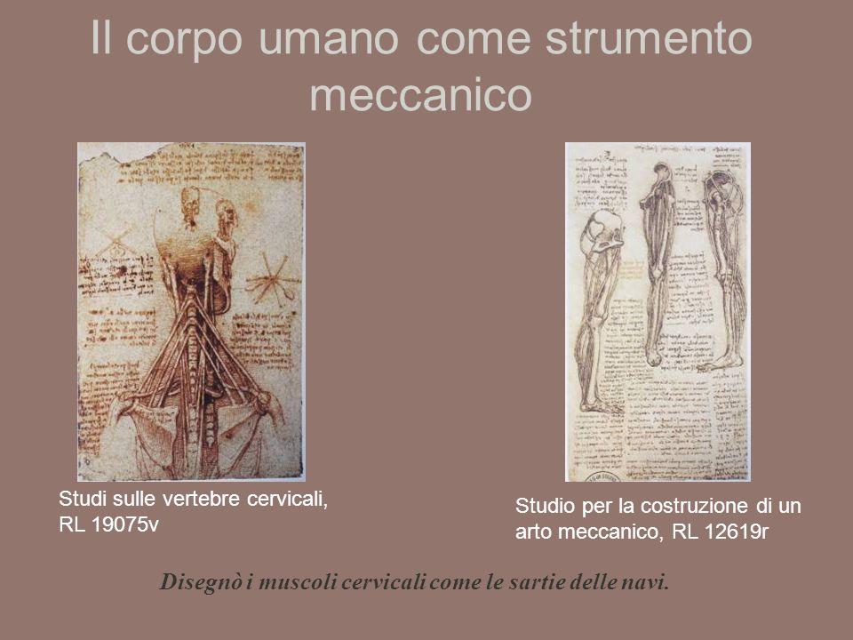 Il corpo umano come strumento meccanico Studio per la costruzione di un arto meccanico, RL 12619r Studi sulle vertebre cervicali, RL 19075v Disegnò i muscoli cervicali come le sartie delle navi.