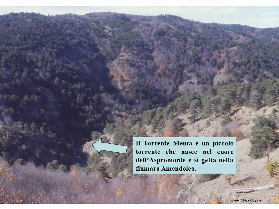 Il Torrente Menta è un piccolo torrente che nasce nel cuore dellAspromonte e si getta nella fiumara Amendolea. Foto: Mara Cagnin