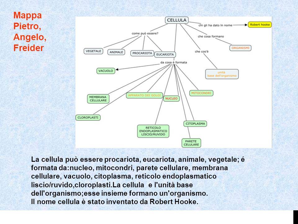 Mappa Pietro, Angelo, Freider La cellula può essere procariota, eucariota, animale, vegetale; é formata da:nucleo, mitocondri, parete cellulare, membr
