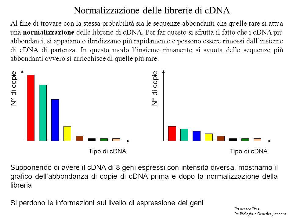 Tipo di cDNA N° di copie Normalizzazione delle librerie di cDNA Tipo di cDNA N° di copie Supponendo di avere il cDNA di 8 geni espressi con intensità diversa, mostriamo il grafico dellabbondanza di copie di cDNA prima e dopo la normalizzazione della libreria Si perdono le informazioni sul livello di espressione dei geni Al fine di trovare con la stessa probabilità sia le sequenze abbondanti che quelle rare si attua una normalizzazione delle librerie di cDNA.