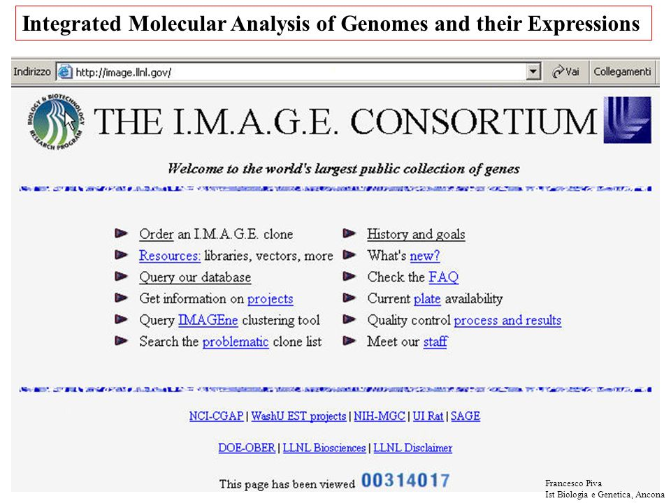 Integrated Molecular Analysis of Genomes and their Expressions Francesco Piva Ist Biologia e Genetica, Ancona