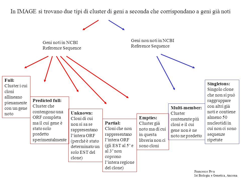 Geni noti in NCBI Reference Sequence Geni non noti in NCBI Reference Sequence In IMAGE si trovano due tipi di cluster di geni a seconda che corrispond