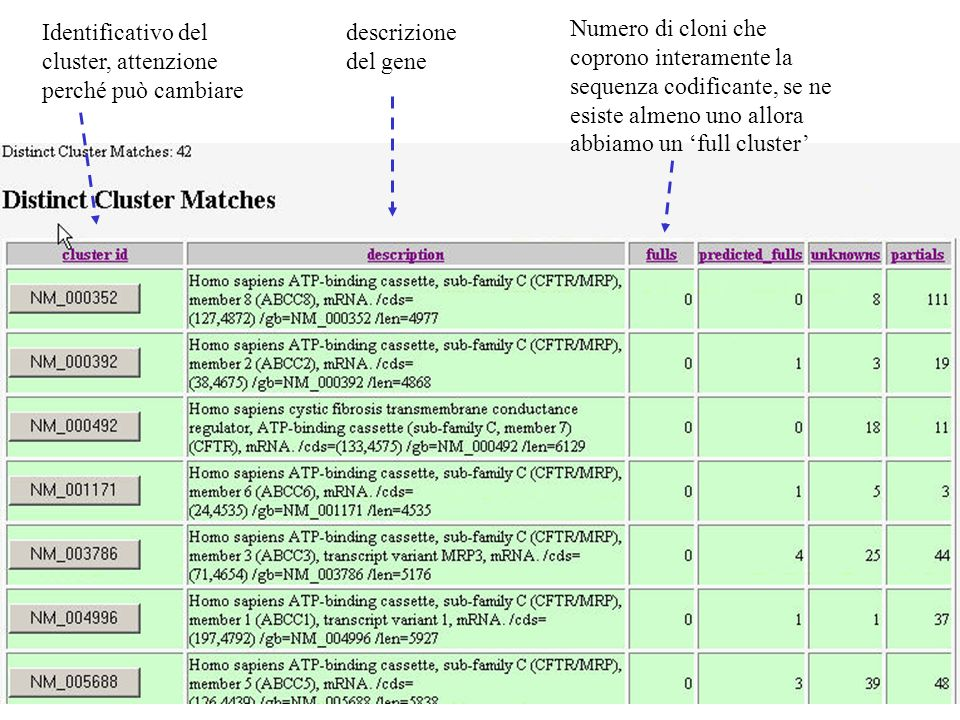descrizione del gene Identificativo del cluster, attenzione perché può cambiare Numero di cloni che coprono interamente la sequenza codificante, se ne esiste almeno uno allora abbiamo un full cluster