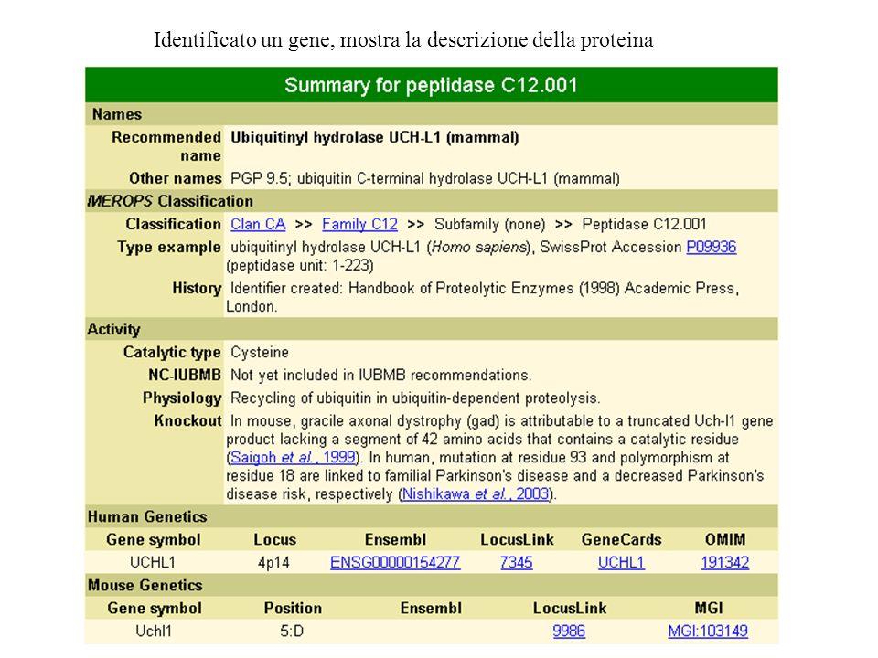 Identificato un gene, mostra la descrizione della proteina
