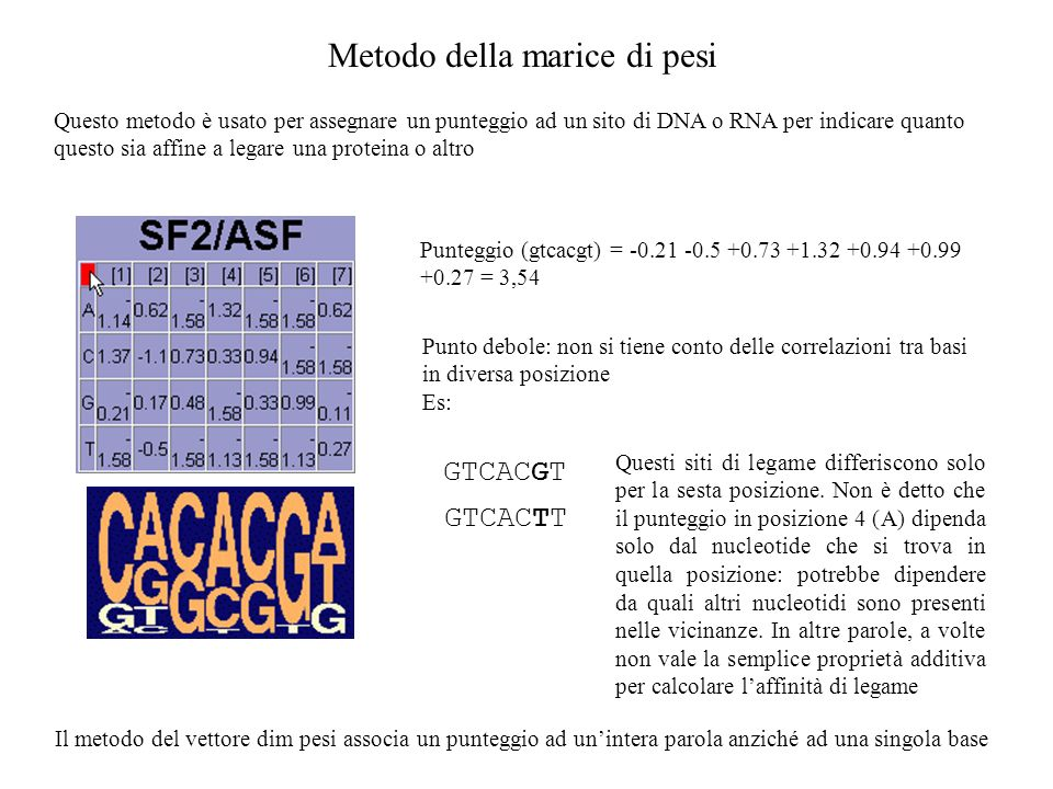 Metodo della marice di pesi Questo metodo è usato per assegnare un punteggio ad un sito di DNA o RNA per indicare quanto questo sia affine a legare una proteina o altro Punto debole: non si tiene conto delle correlazioni tra basi in diversa posizione Es: Punteggio (gtcacgt) = -0.21 -0.5 +0.73 +1.32 +0.94 +0.99 +0.27 = 3,54 GTCACGT GTCACTT Questi siti di legame differiscono solo per la sesta posizione.