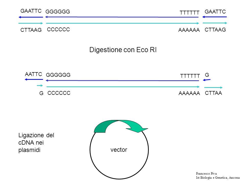 La potenzialità di una libreria di cDNA è in relazione al numero di inserti di cDNA indipendenti che siamo riusciti a clonare.