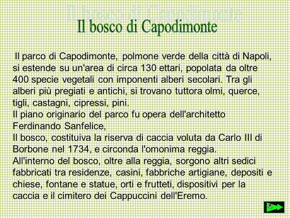 Il parco di Capodimonte, polmone verde della città di Napoli, si estende su un'area di circa 130 ettari, popolata da oltre 400 specie vegetali con imp