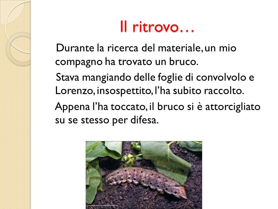 Il ritrovo… Durante la ricerca del materiale, un mio compagno ha trovato un bruco. Stava mangiando delle foglie di convolvolo e Lorenzo, insospettito,