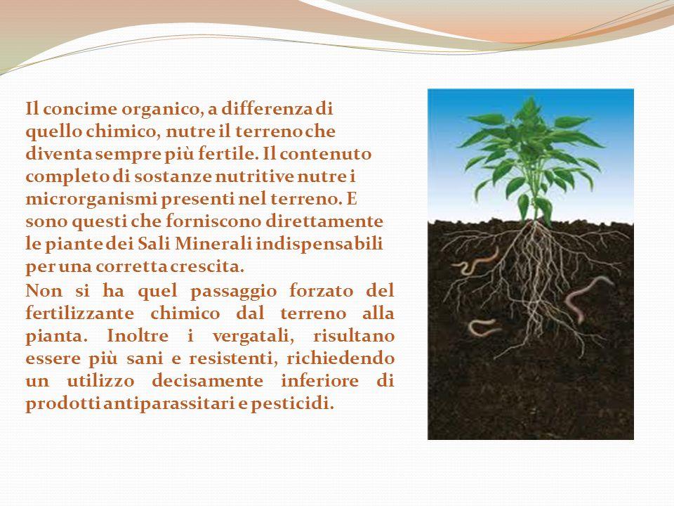 Il fertilizzante sintetico permette la crescita della pianta, ma la rende incompleta e ne varia la resistenza stessa, diminuendo la sua capacità vitale.