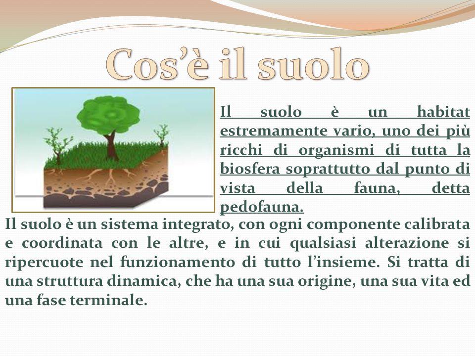 Normalmente si individuano quattro tipi principali di suolo: Sabbioso: è un suolo facilmente lavorabile, la sostanza organica viene velocemente mineralizzata, ha una scarsissima capacità di ritenuta idrica ed è povero in elementi nutritivi.
