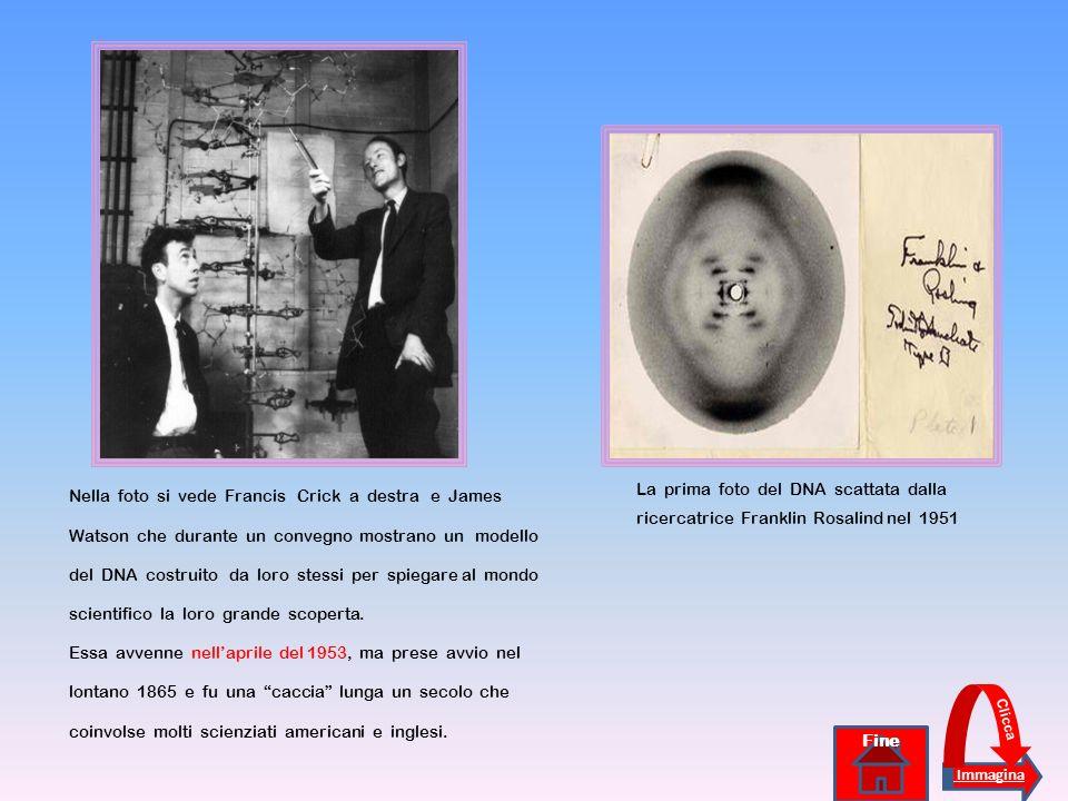 Nella foto si vede Francis Crick a destra e James Watson che durante un convegno mostrano un modello del DNA costruito da loro stessi per spiegare al